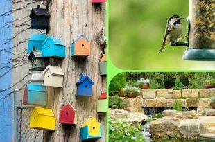 3 Möglichkeiten, um Ihren Garten zu einem Paradies für Wildtiere zu machen: Gastbeitrag