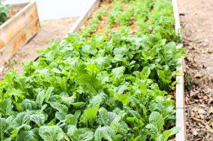 Planen Sie Ihren Garten: Das beste Gemüse für volle Sonne, teilweise Sonne und Schatten