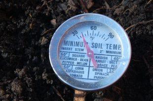 Nehmen Sie die Temperatur Ihres Bodens, um eine erfolgreiche Saatkeimung und Pflanzenzüchtung von Pete Biggam zu gewährleisten
