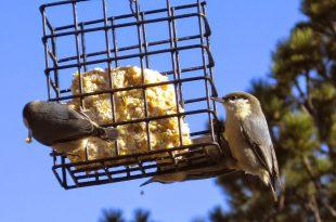 Sich um unsere Vogelfreunde im Winter von Molly Niven kümmern