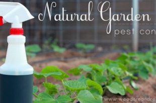 Mein Bio Garten Schädlingsbekämpfung