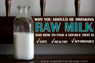 Warum DU Rohmilch trinken solltest...