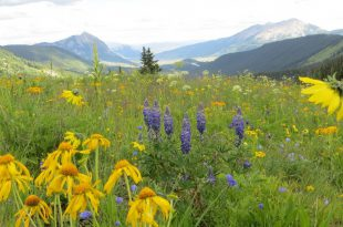 Jährliche Konferenz der Colorado Native Plant Society am 12. September