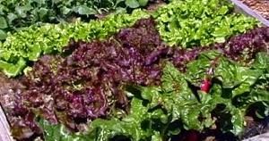 Maximierung Ihrer Ernte in einem kleinen Garten von Sharon Faircloth