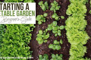 Starten eines Gemüsegartens