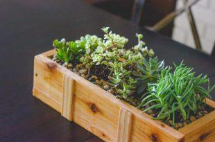 Sukkulenten Pflanzer DIY (für unter $ 10)