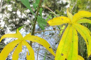 Feiert die Herbst-Tagundnachtgleiche