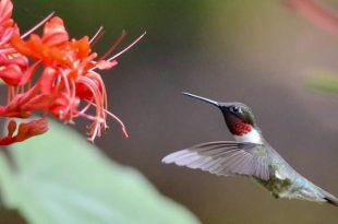 Fangen Sie den Buzz: 8 Fakten über Kolibris