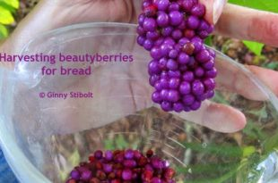 Beautyberry Brot