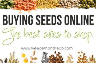 Seeds Online kaufen: Die besten Seiten zum Einkaufen!