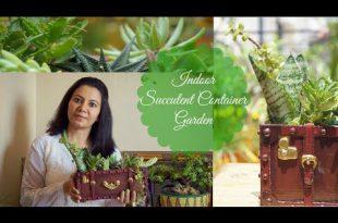 Wie Indoor Sukkulenten Container Garten wachsen