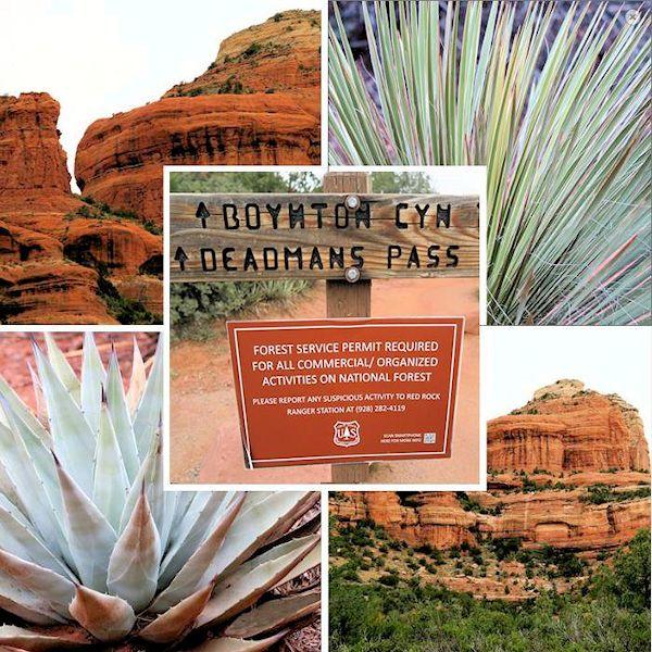 Wüstenflora und Landformen von Sedona, Arizona