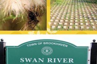 Dieser Monat im Garten: Swan River Preserve-Vom Parkplatz zu Native Habitat