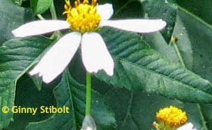 Invasiv vs. Aggressiv: Pflanzen und Tiere