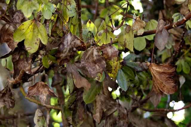 Nützliche Pilze zur Verbesserung der Gesundheit des Gartens