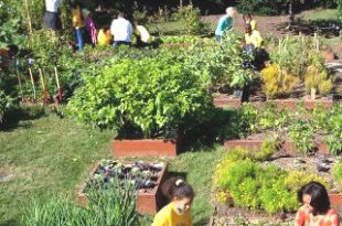 Ist Gartenarbeit politisch?