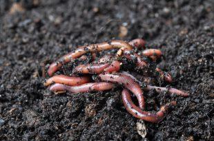 Was Wurm Castings auf Ihren Boden bringen kann