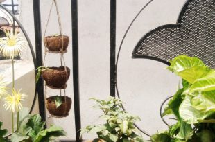 Wenn Kreativsäfte fließen: Kokosschale Hanging Planter