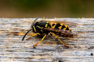 Was Sie über gelbe Jacken im Herbst wissen müssen