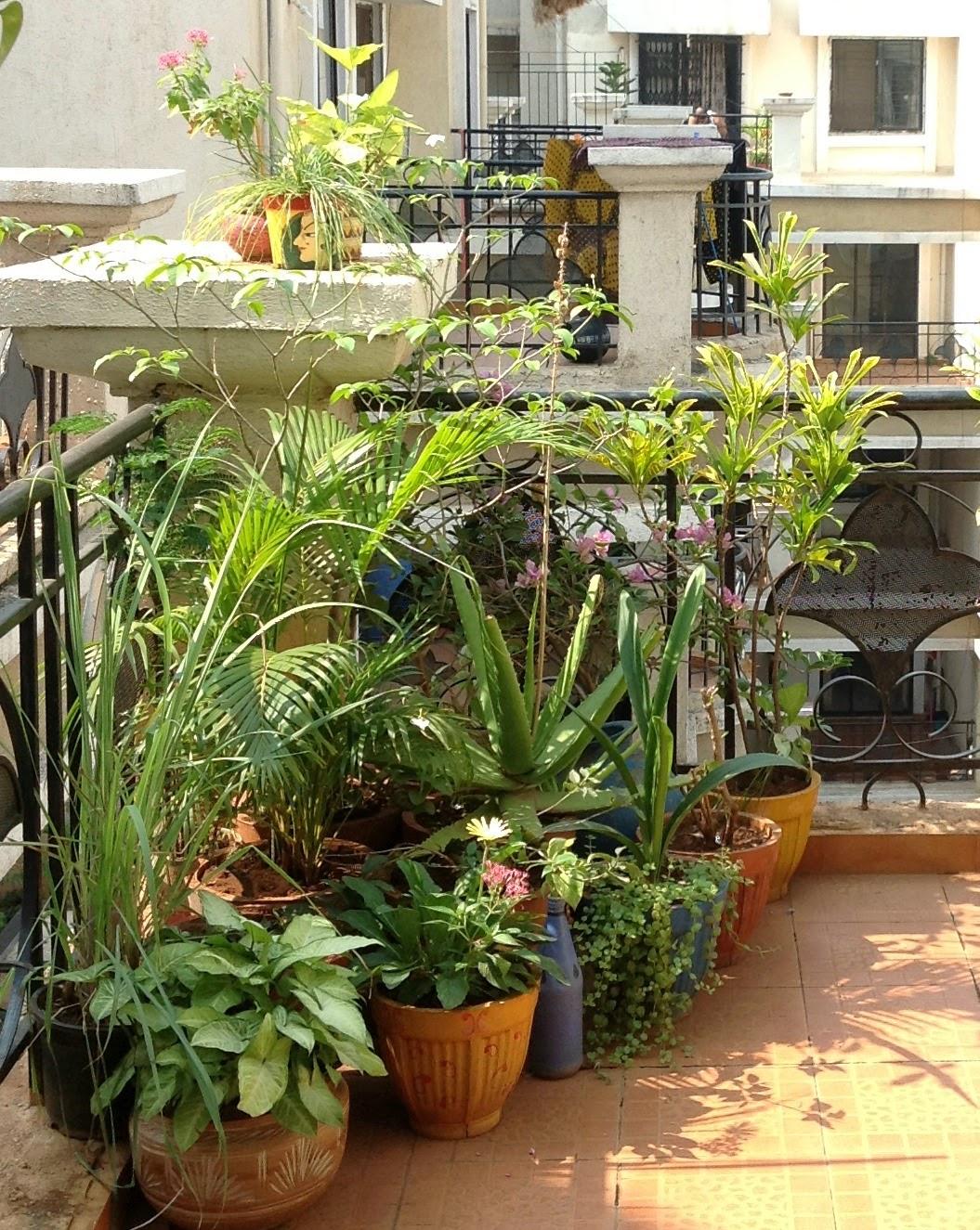 Schneller Weg, um einen Garten zu verschönern !!
