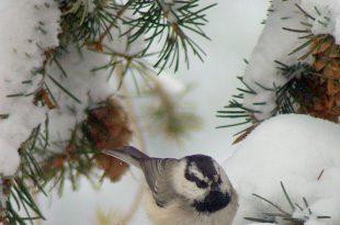 Fütterung der Vögel von Tina Ligon