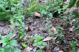 Der Kräutergarten: eine (Mint-) Familienangelegenheit