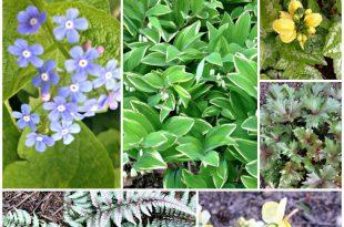 Outdoor-Dekoration / Gartenarbeit: Erfahren Sie mehr über 7 einfach zu wachsen Schatten liebende Stauden, ein wenig außerhalb der Norm tha ...