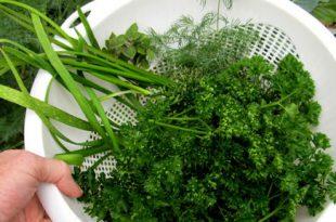 Der Anbau von Esswaren hat uns 15% unseres Nahrungsmittelbudgets gespart