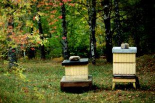 Imkerei: Letzter Aufruf für Herbst Wartung & Winter Prep