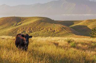 Euthanasie auf dem Bauernhof: 5 Dinge zu beachten