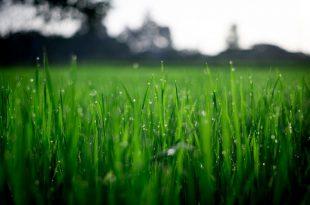 3 wichtige Schritte, um Ihren Rasen in gutem Zustand zu halten