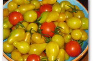 Tomaten-Dünger-Tipps