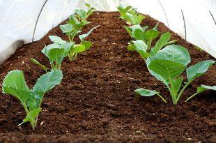 6 Winter Crops zum Wachsen und Verkaufen