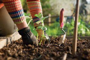 7 Geheimnisse für einen kontinuierlich produktiven Gemüsegarten